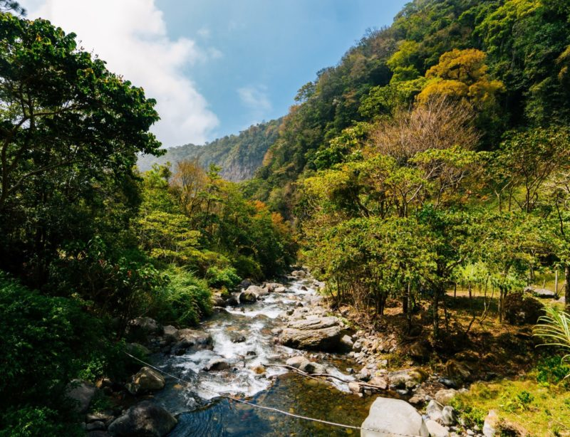 forest river scenery