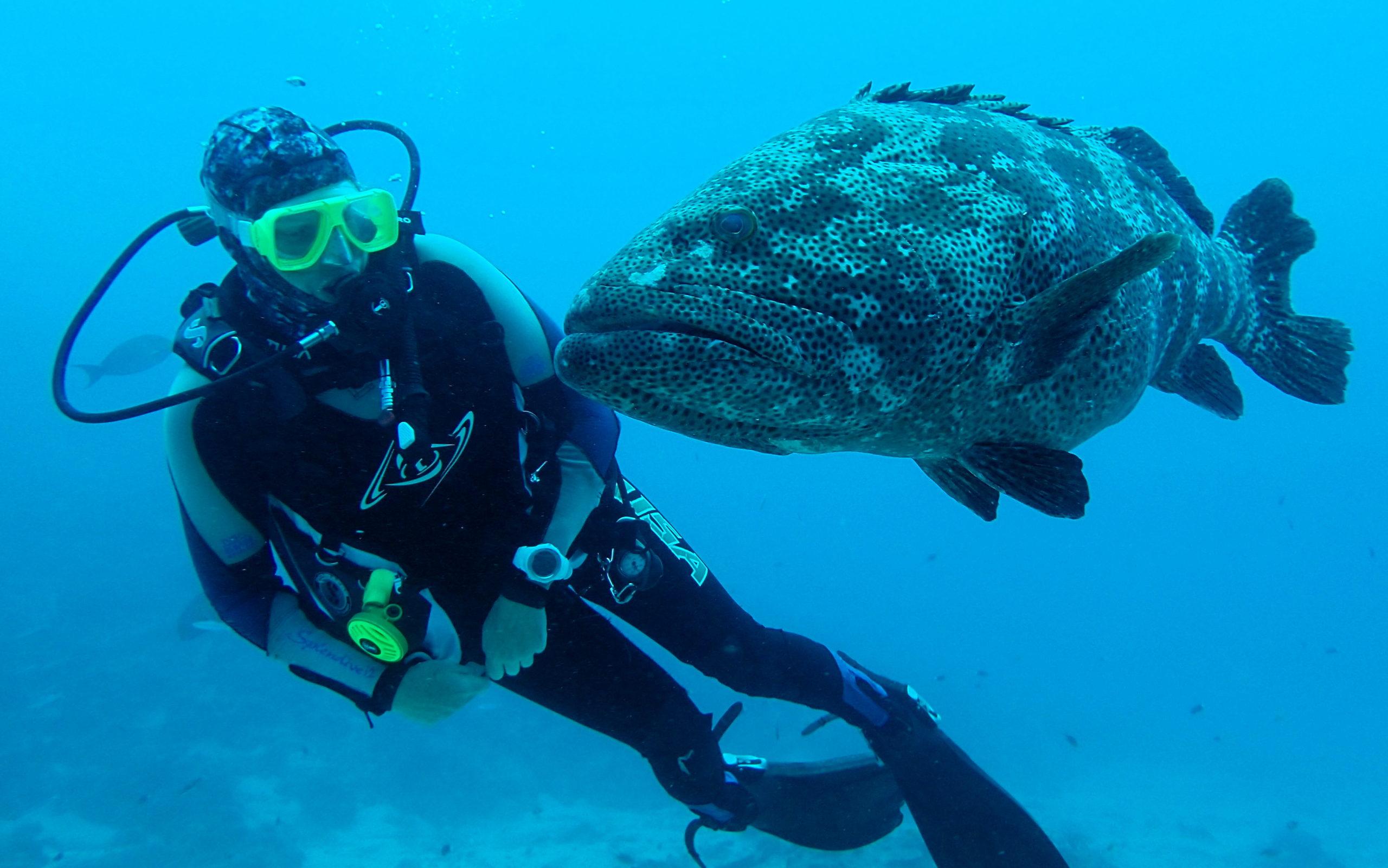 scuba diver with cod