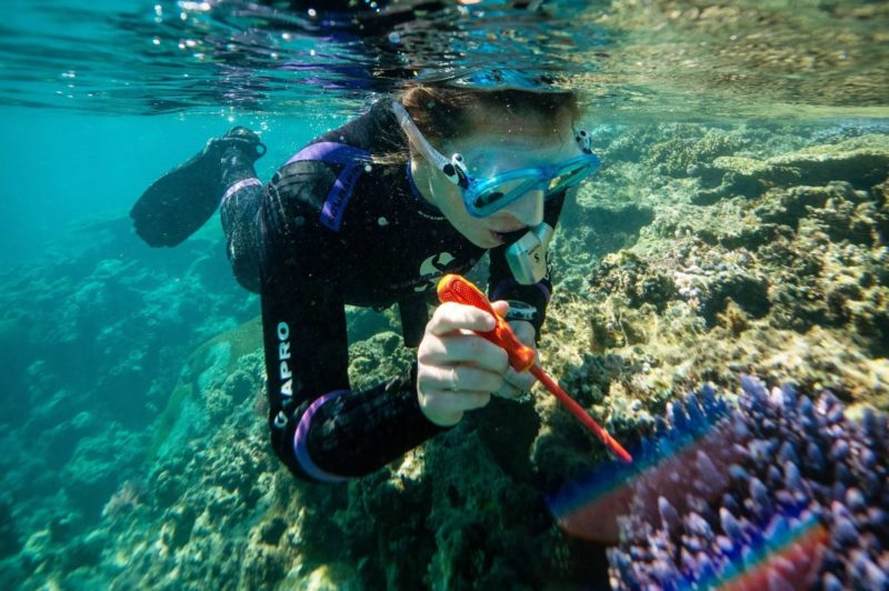 coral gardens marine research