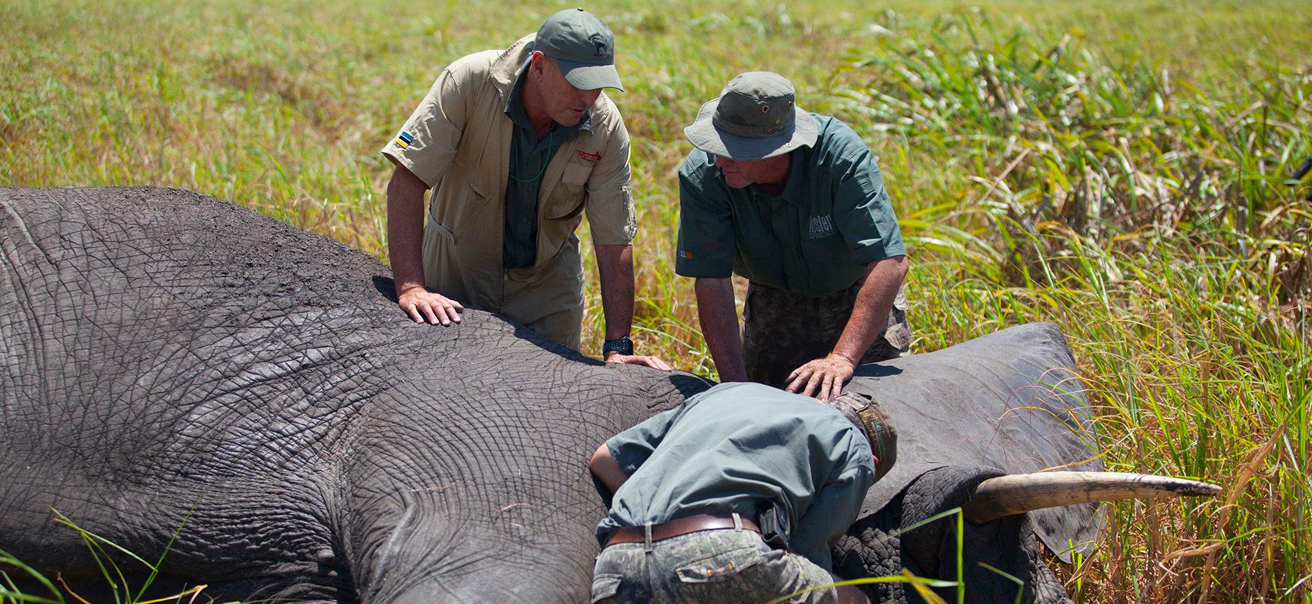 conservation elephant africa