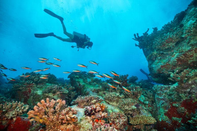 foundation diving ocean fish