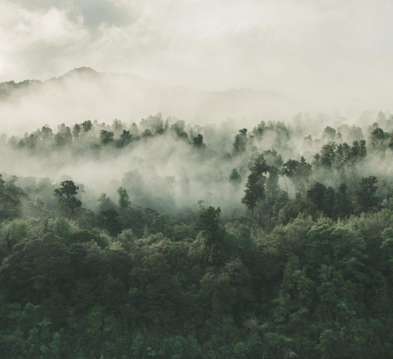 forest landscape conservation foundation