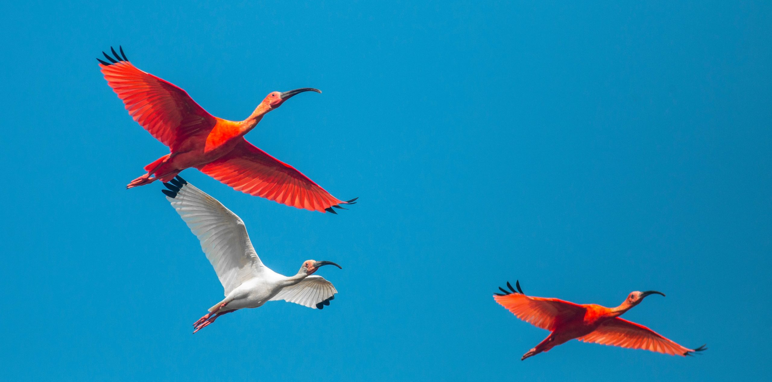 flying tropical birds foundation