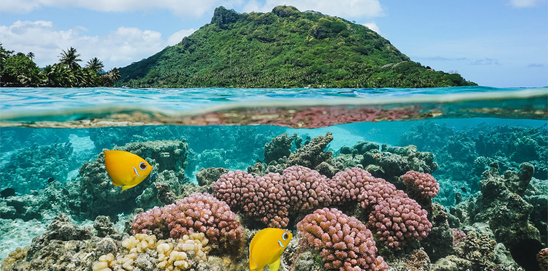 underwater fish coral french polynesia