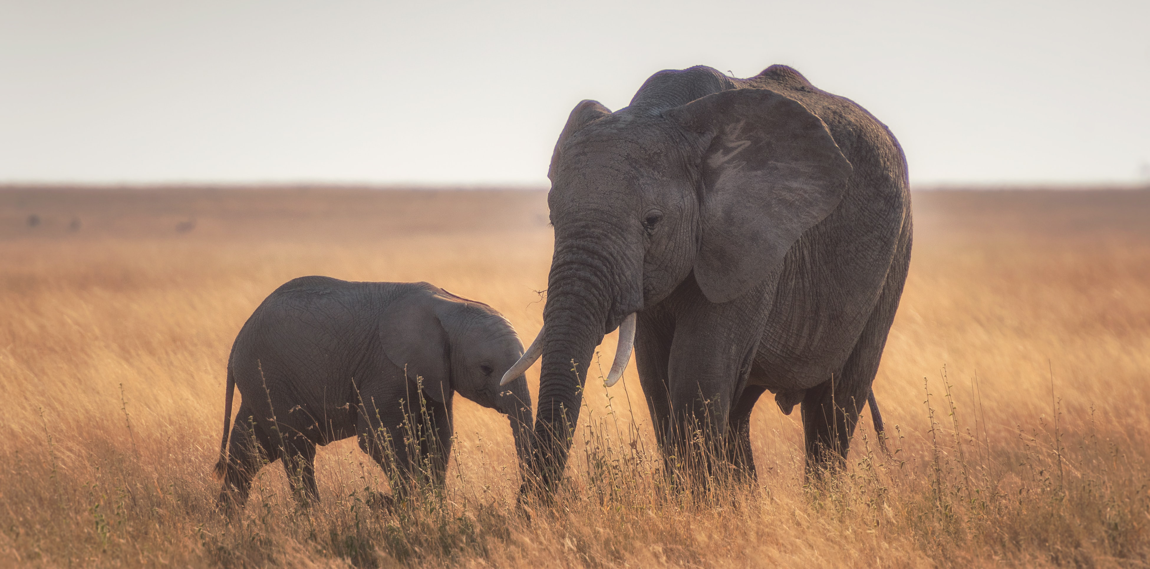mother and calf elephant conservation africa