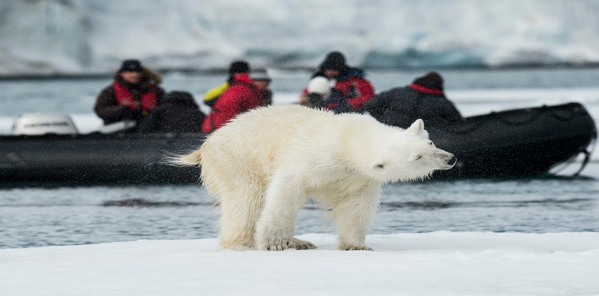 polar bear conservation foundation