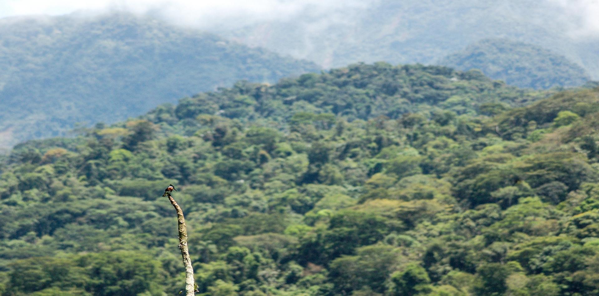 vietnam endangered forest khe nuong troc