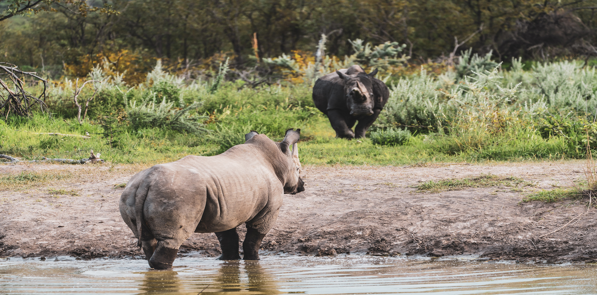 namibia etosha national park rhinos