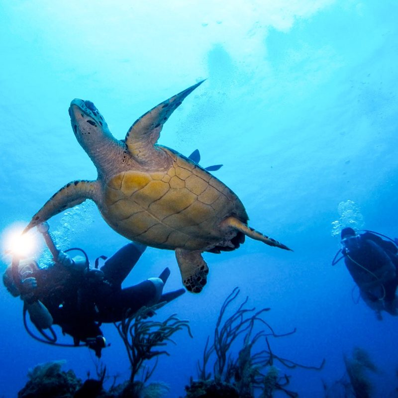 yacht conservation sea turtle research