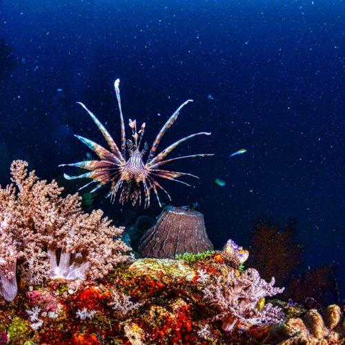 fish underwater coral reefscape