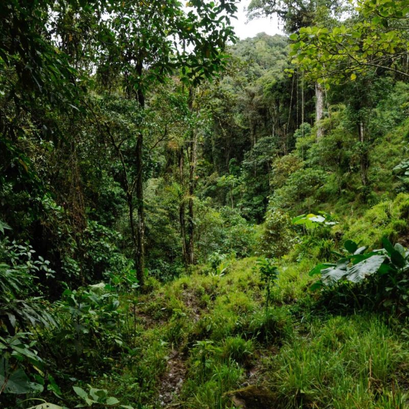khe nuong troc forest vietnam
