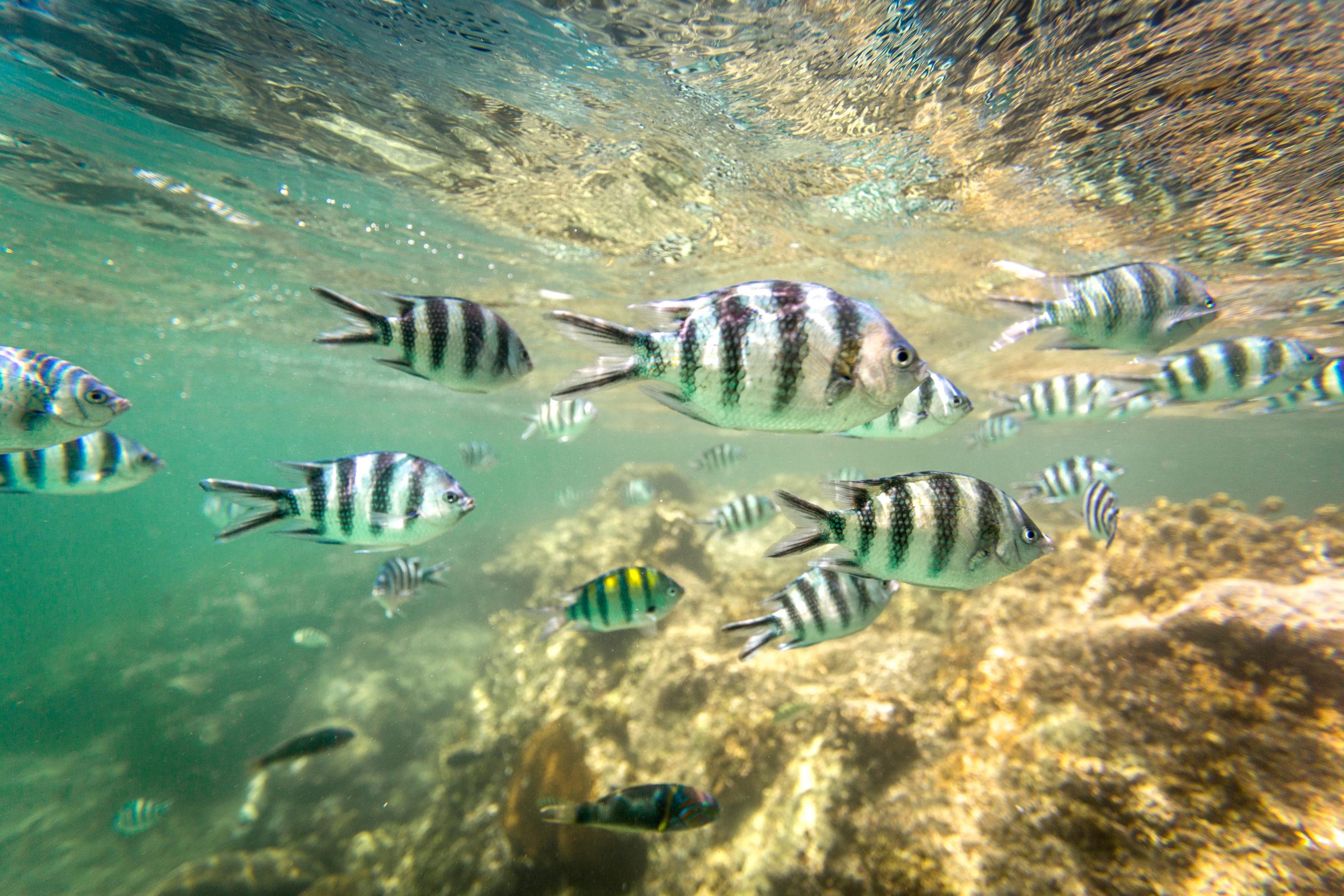 watamu damselfish national reef park kenya school
