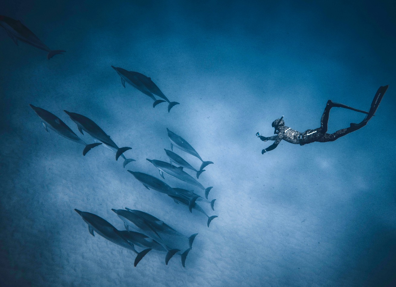 pod underwater dolphin photography free