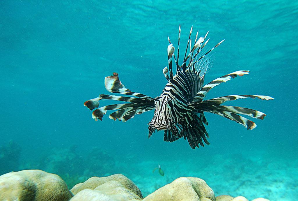 mombasa fish coral lion reef Kenya