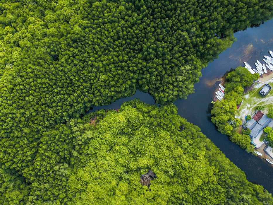 forest lembongan mangrove nusa