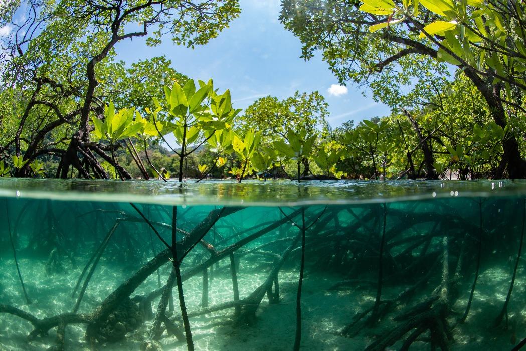eye forest over fish under forest inside mangrove