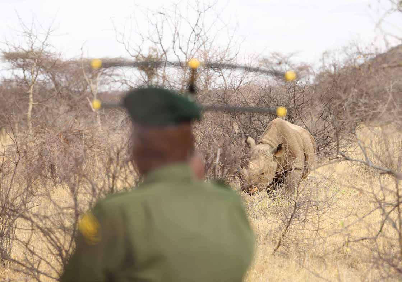 rhino tracking africa field ranger