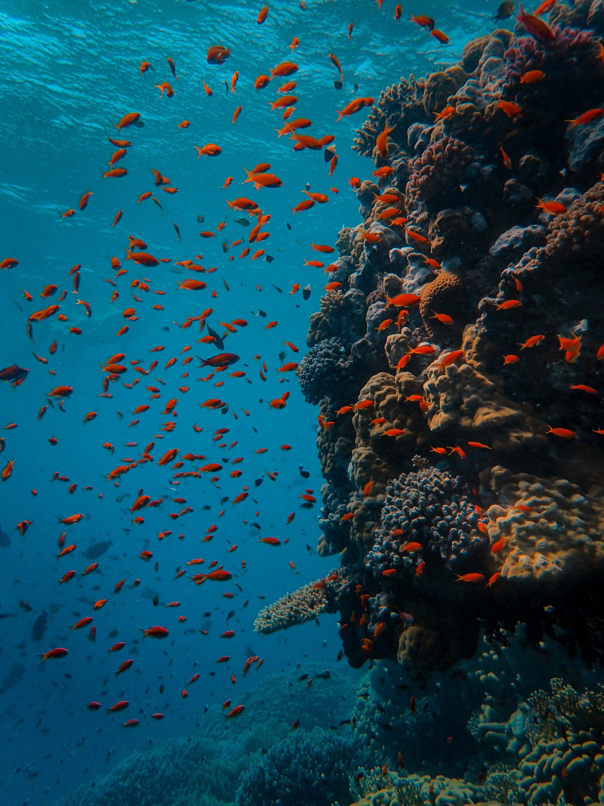 reef shagra red marsa coral orange sea