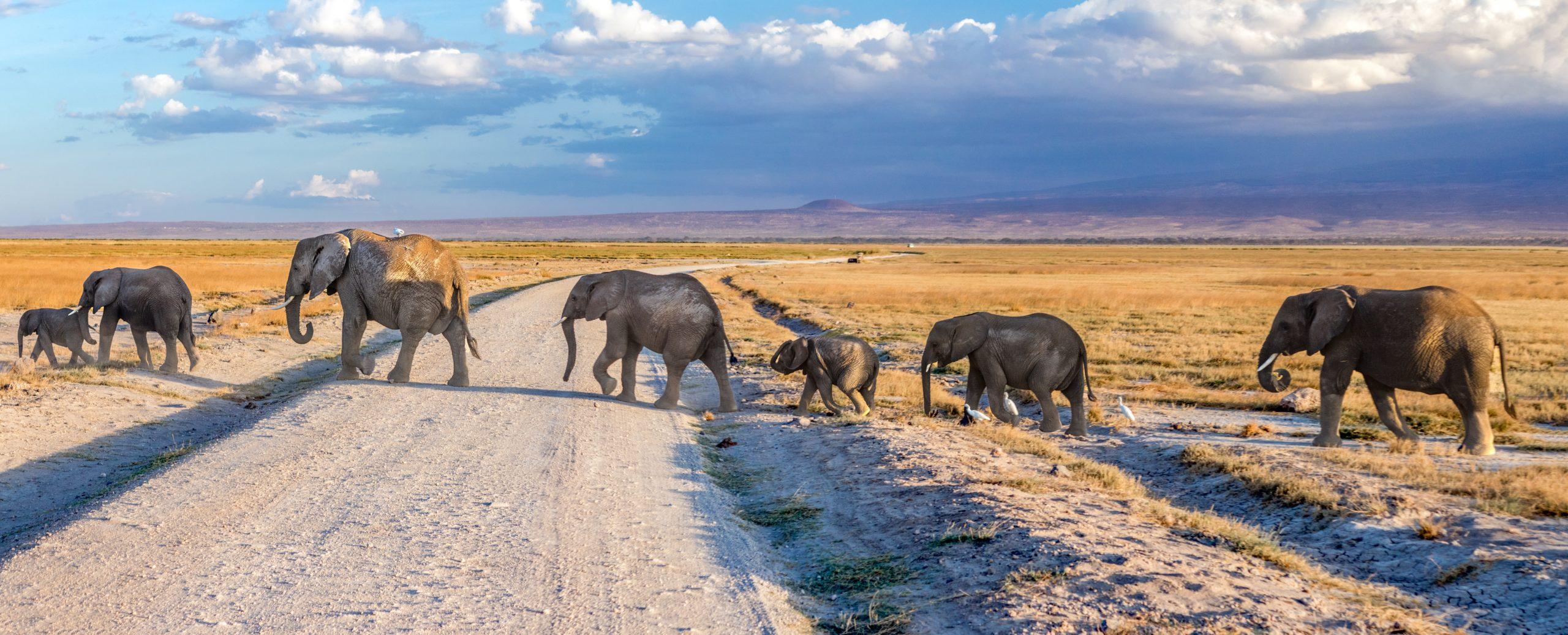 grey amboseli family kenya elephants