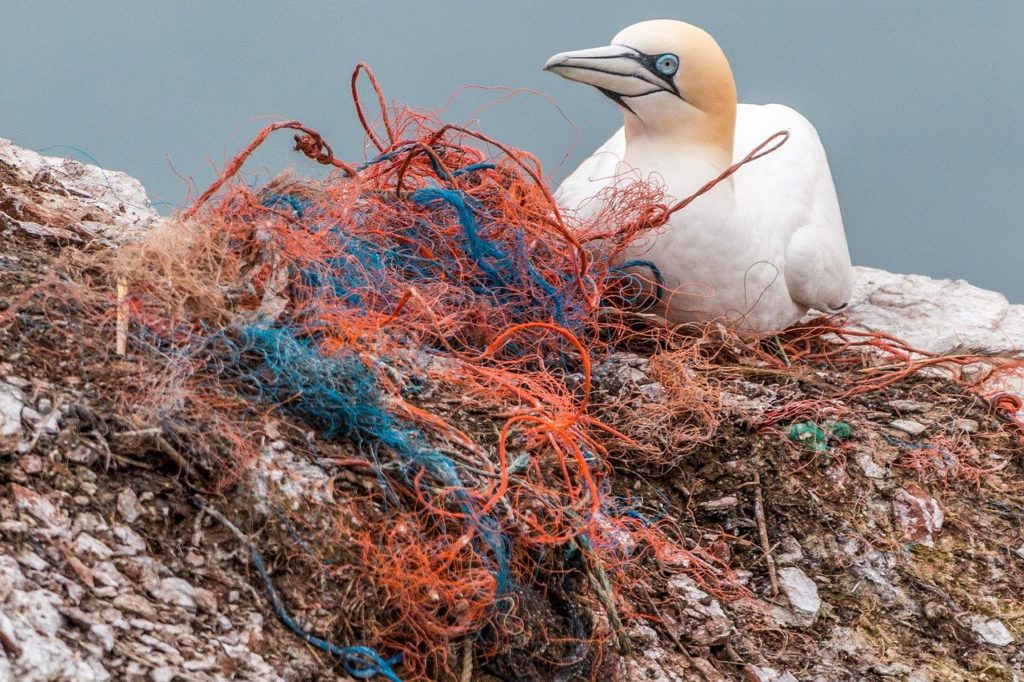 blue gannet bird netting red