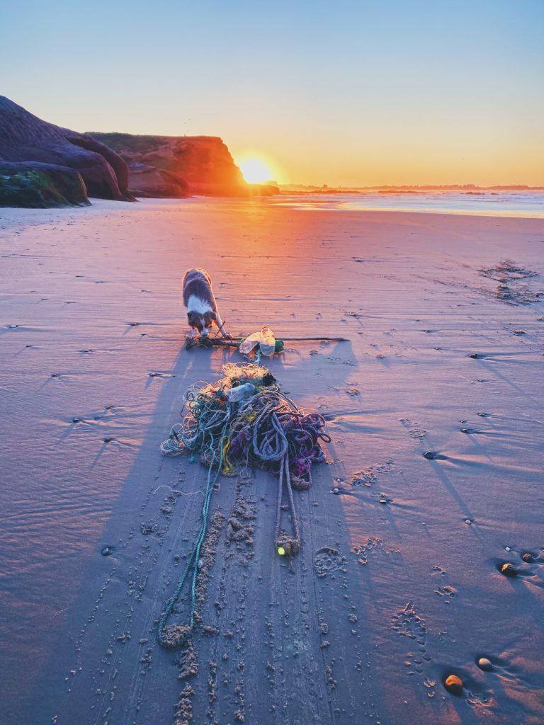 dog litter portugal beach sunset netting