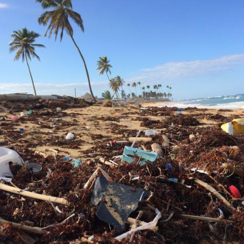cana republic beach plastic seaweed litter dominican punta