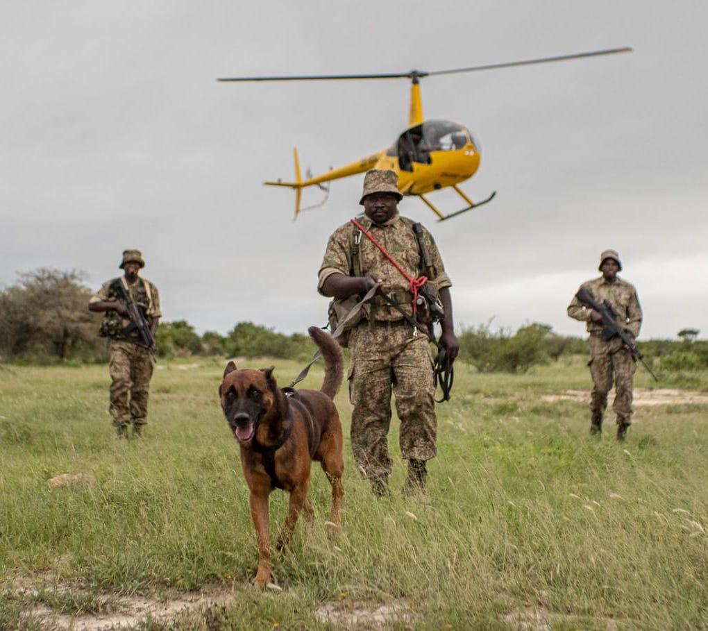 ranger canine unit transfrontier