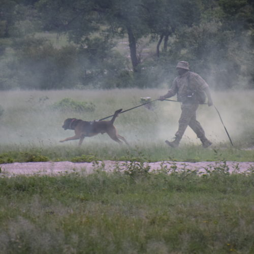ranger training canine unit transfrontier