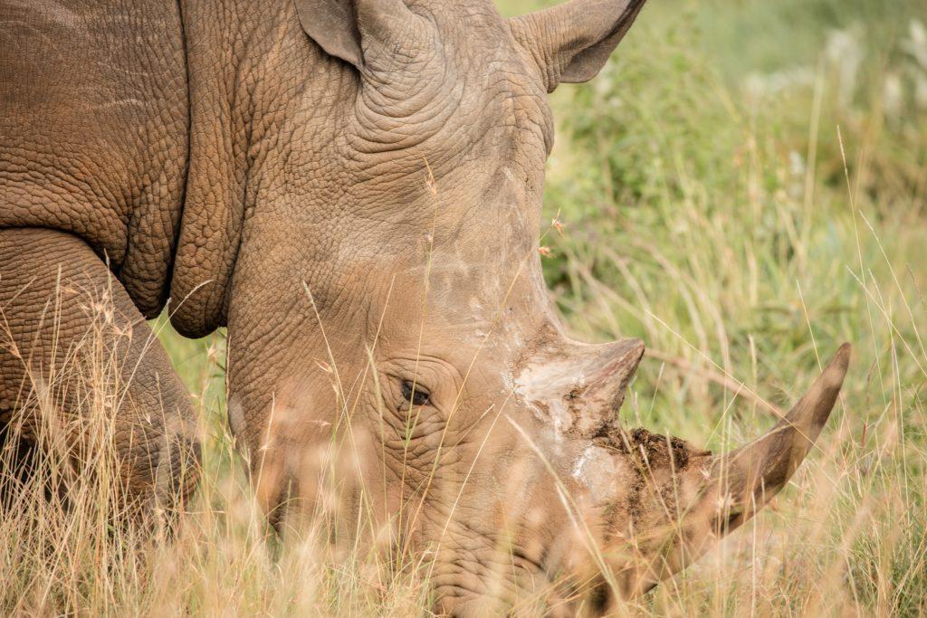 rhino conservation africa
