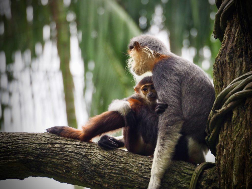 jungle tree monkey baby