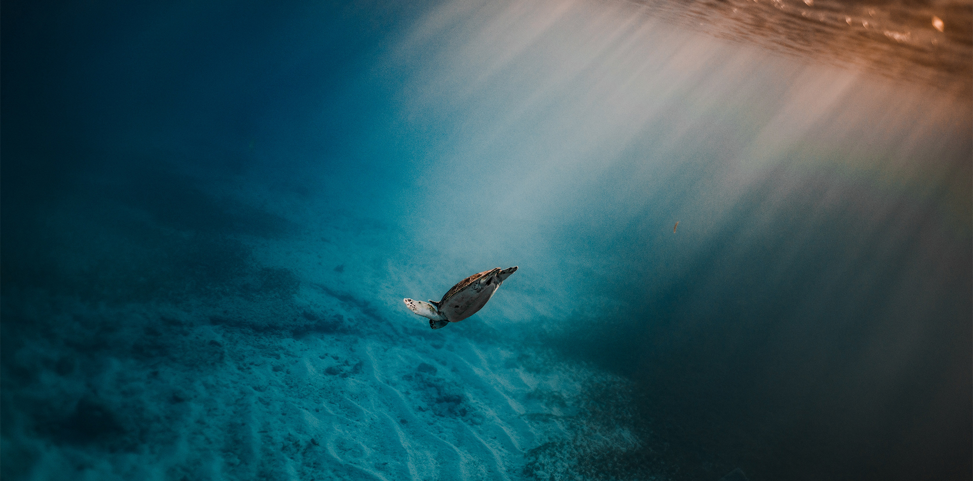 underwater diving sea turtle